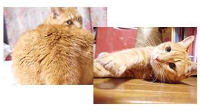 トフカスシリーズを愛用してくださっている写真や、おトイレの写真はもちろん、ネコちゃんの寝ている姿や遊んでいる姿など、なんでも投稿してください!おすすめのトフカス保存方法や、使用方法もあったらご紹介ください!あなたのご自慢のネコちゃんが、ペグテックのホームページに載るかもしれません!