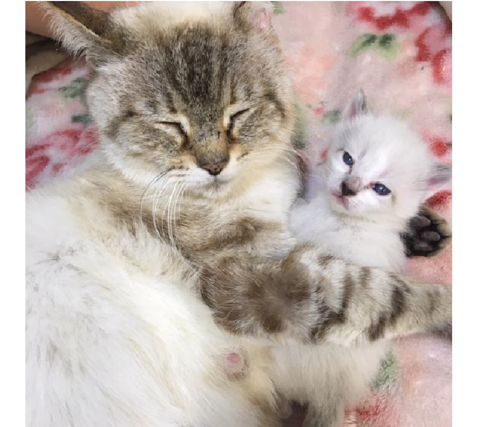 マミちゃん(親猫)、バニラちゃん加工